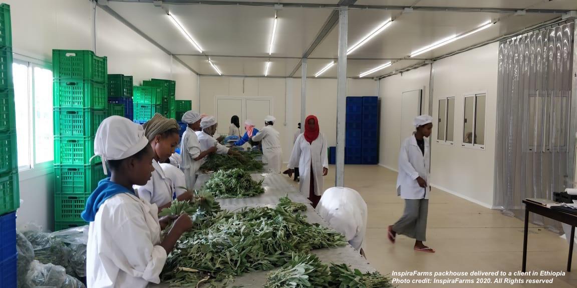 InspiraFarms packhouse in Ethiopia