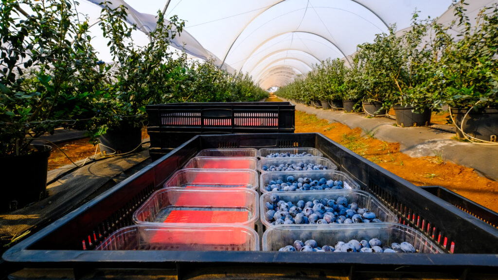 Lauetta Farm, Zimbabwe